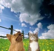 Ateus lucram com empresa para cuidar de animais de estimação após o arrebatamento