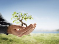 Igreja Católica manda fiéis plantarem árvores ao invés de rezarem quando pecam