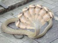 Mulher teria espelindo uma cobra de 7 cabeças e outros bichos após  passar por exorcísmo com Pastor