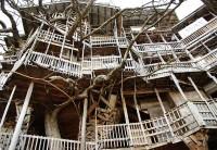"""A """"pedido de Deus"""" homem constroi maior casa na árvore do mundo com 10 andares. Veja fotos"""