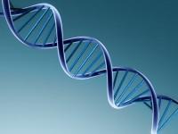 Cientistas afirmam que podem provar a existência de Deus pela análise do DNA