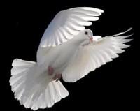 """Bispo Macedo afirma que """"todos que são batizados com o Espírito Santo falam em línguas""""; Colunista rebate: """"Errado"""". Leia na íntegra"""