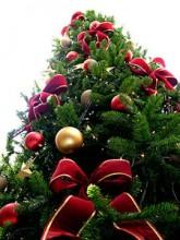 O cristão pode ter uma árvore de Natal em sua casa? Veja opinião sobre o tema