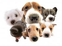 UIPA: entidade oferece abrigo e tratamento a animais domésticos abandonados