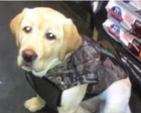 """Homem explode cachorro de estimação da família afirmando que havia """"um demônio dentro dele"""""""