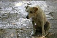 Jovem esquarteja o próprio cachorro e joga dentro de igreja evangélica durante culto