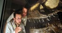 Museu cristão exibe fóssil de dinossauro afirmando que ele teria morrido no dilúvio bíblico