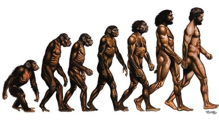Resultado de imagem para teoria da evolução